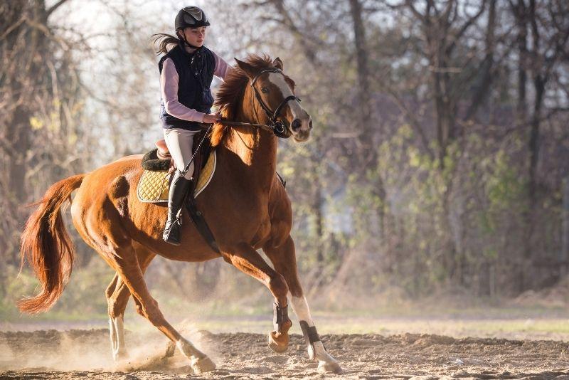 horse riding in Denver