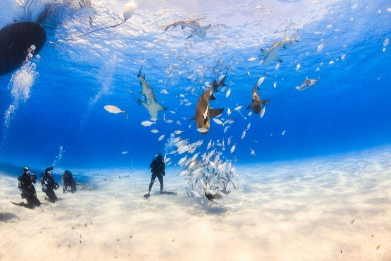 shark diving, The Bahamas