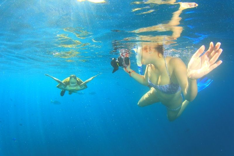 Schnorcheln mit Meeresschildkröten in Playa del Carmen