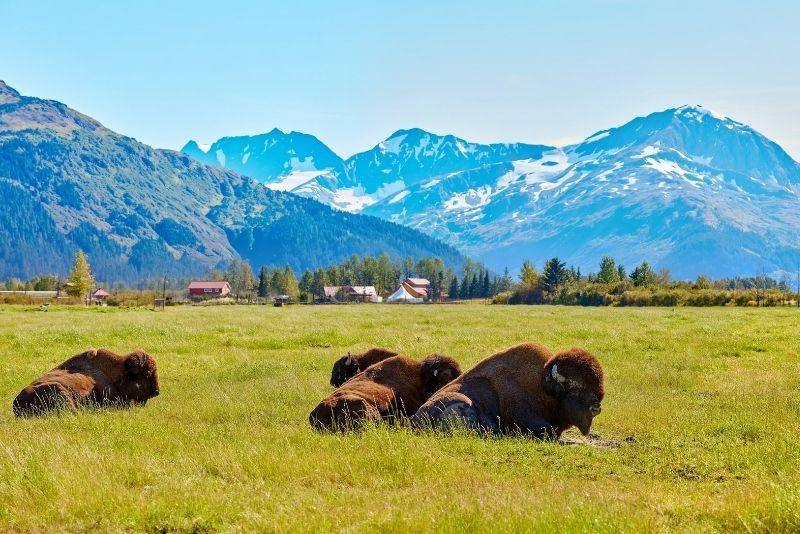 Alaska Wildlife Conservation Center, Anchorage