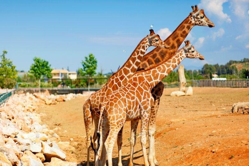 Attica Zoological Park, Athens