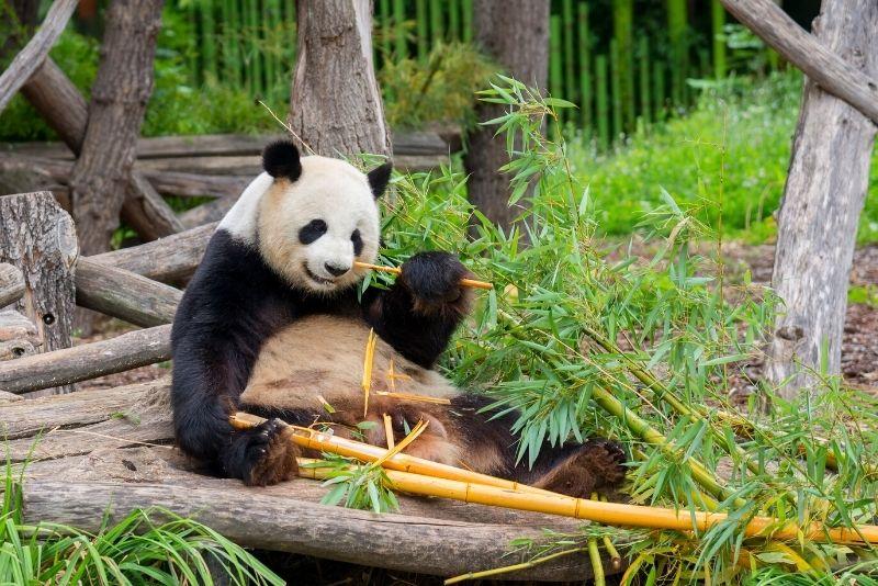 Berliner Zoo, Berlin