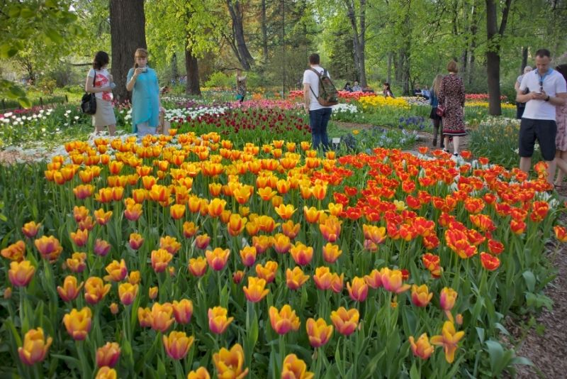 Botanic Gardens of Moscow State University, Moscow