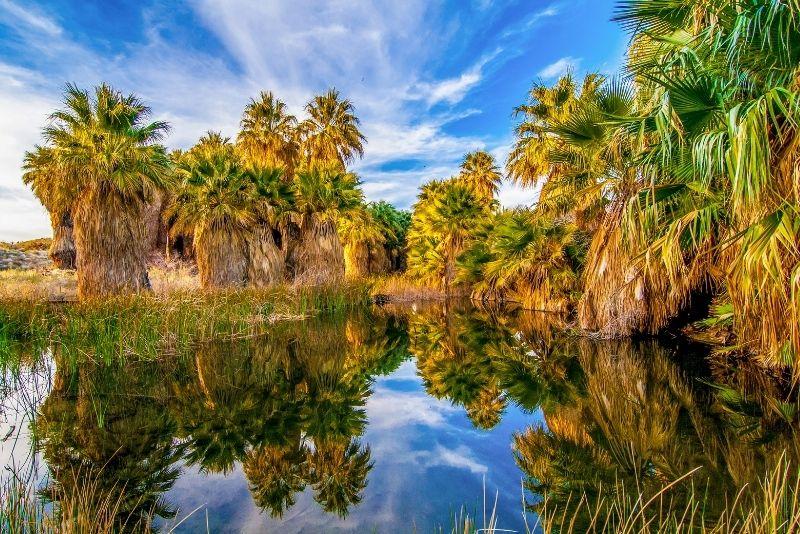 Coachella Valley Preserve, Palm Springs
