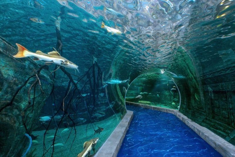 Crocus City Oceanarium, Moscow
