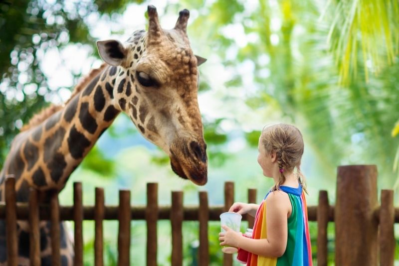 Dublin Zoo, Irland