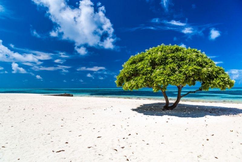 Eagle Beach in Aruba