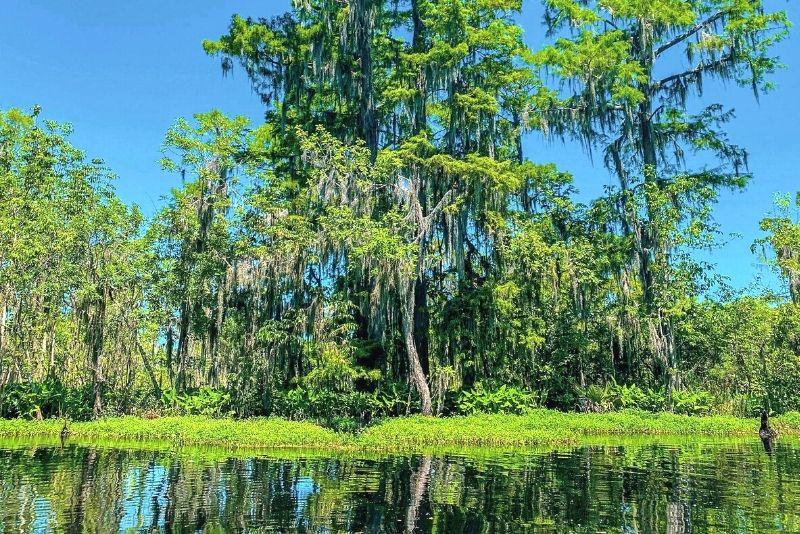 Great Dismal Swamp National Wildlife Refuge in Norfolk, Virginia
