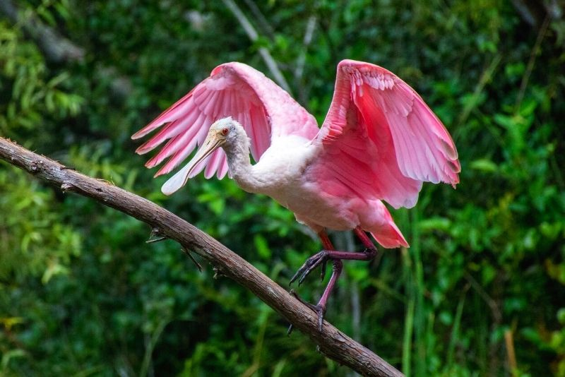 Great Florida Birding and Wildlife Trail, Jacksonville