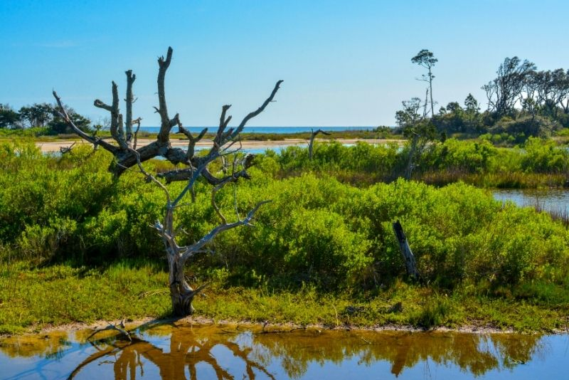 Little and Big Talbot Island State Parks, Jacksonville