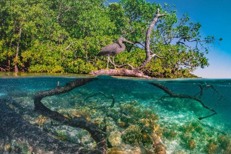 Mangrove Lagoon, St Thomas