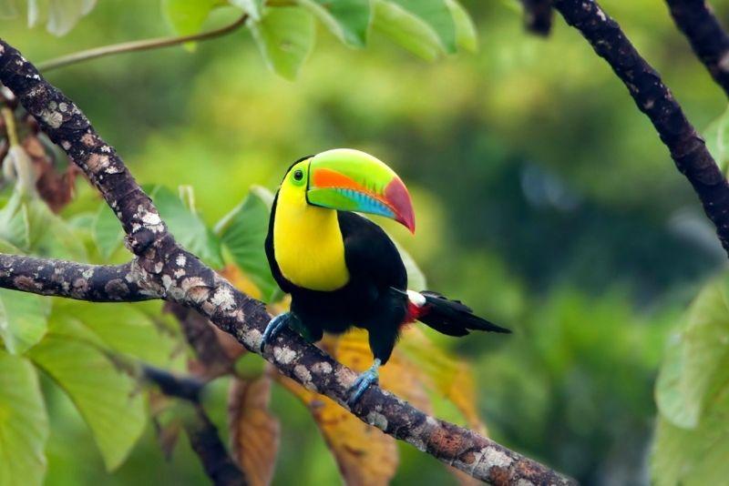 Metropolitan Natural Park, Panama City