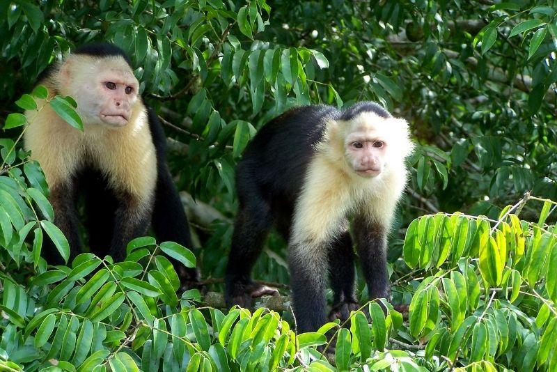 Monkey Island, Panama City