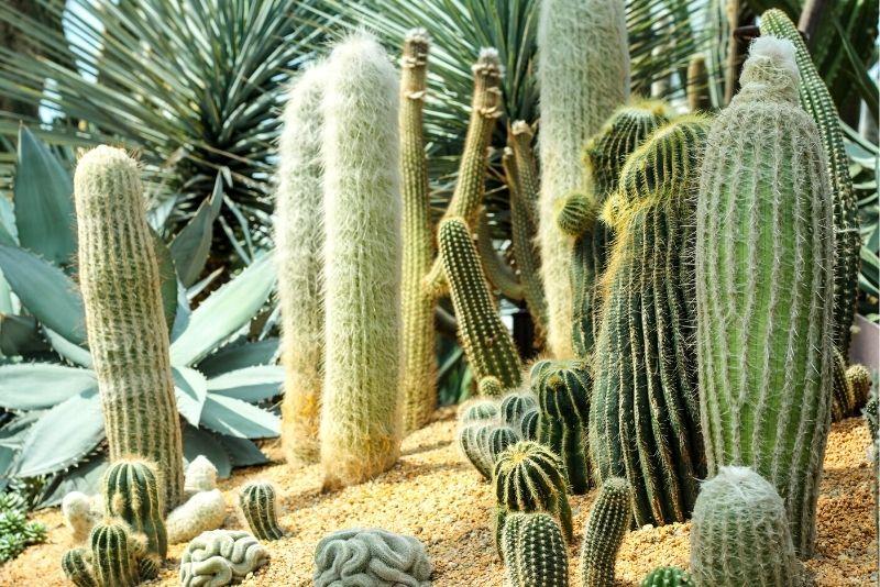 Moorten Botanical Gardens, Palm Springs
