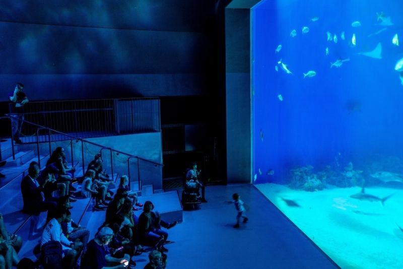 National Aquarium Dänemark, Kopenhagen