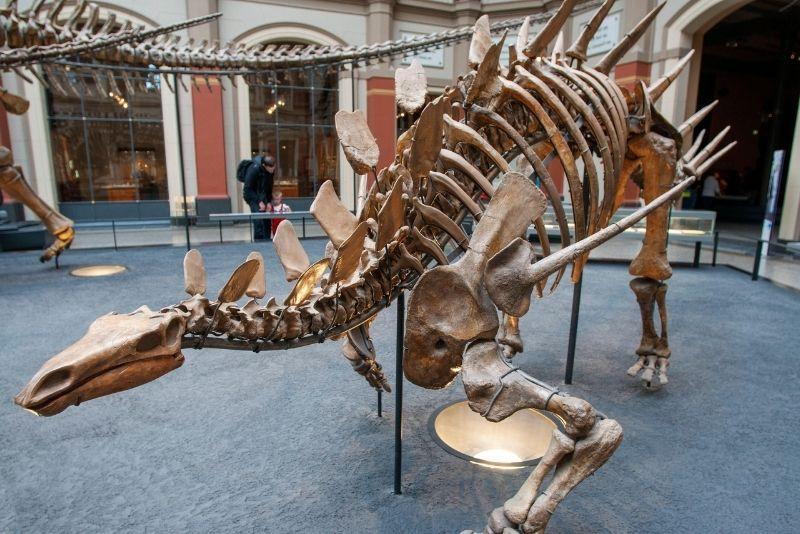 Naturkundemuseum, Berlin