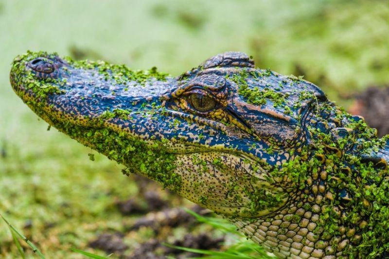 Pinckney Island National Wildlife Refuge, Hilton Head Island