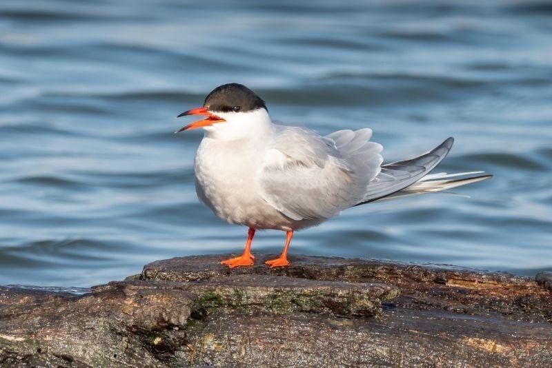 Potter Marsh Bird Sanctuary, Anchorage