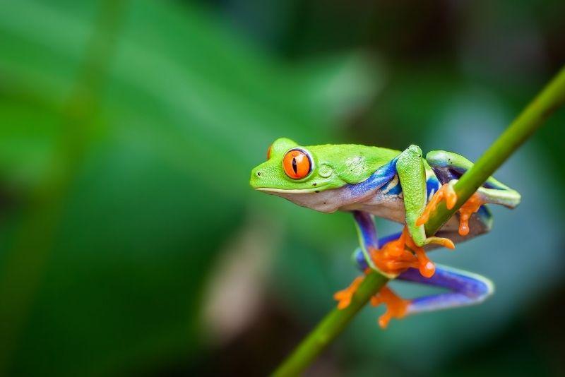 Punta Culebra Nature Center, Panama City