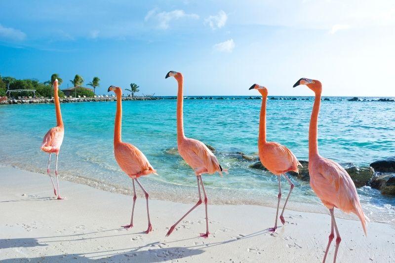 Renaissance Island & Flamingo Beach in Aruba