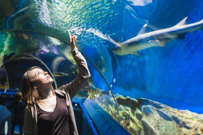 SEA LIFE Bray Aquarium, Dublin
