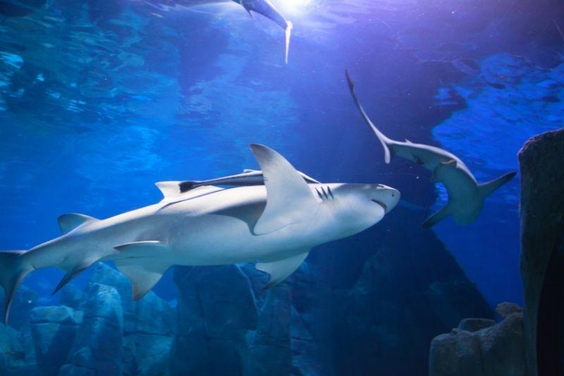 SEA LIFE aquarium Istanbul