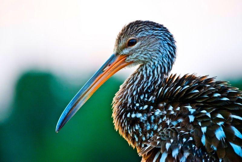 Save Our Seabirds, Inc, Sarasota