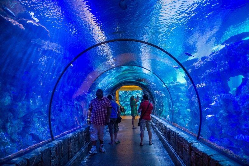 Shark Reef Aquarium, Las Vegas