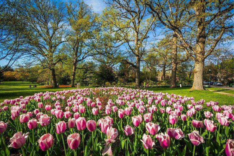 Sherwood Gardens, Baltimore