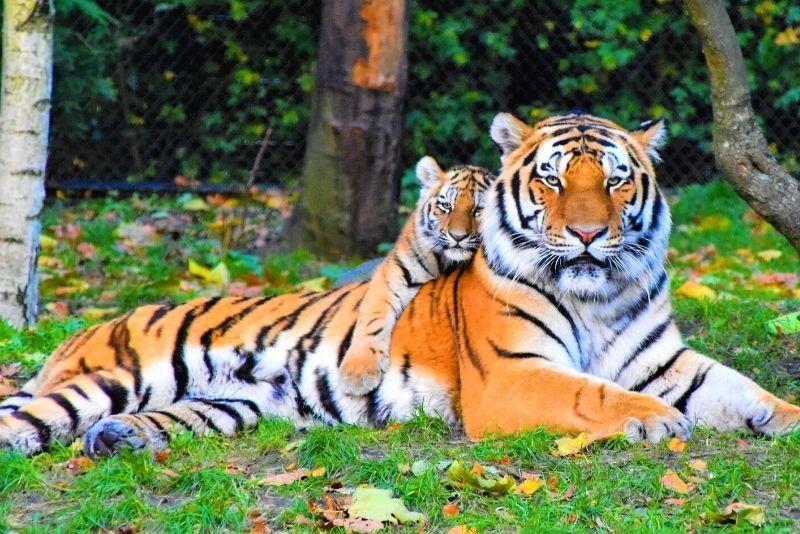 Tiger World, North Carolina