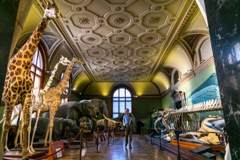 Museo di Storia Naturale di Vienna