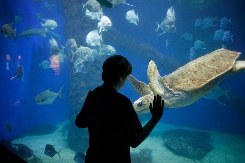 Virginia Aquarium and Marine Science Center, Norfolk