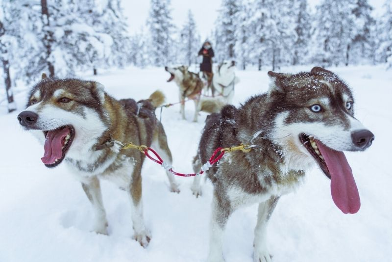 dog sled in Anchorage