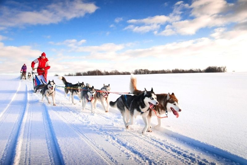 dog sledding in Moscow