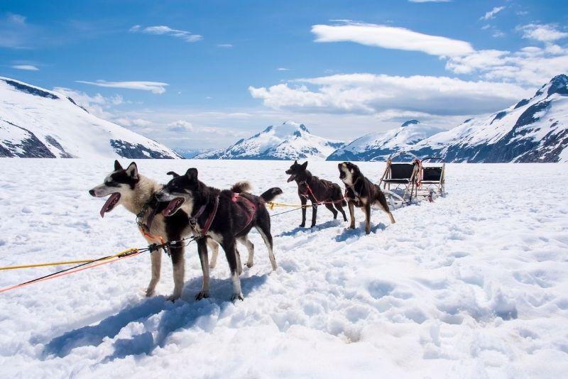 dog sledding tour in Juneau