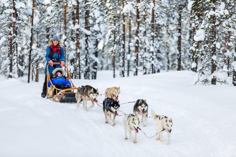 dog sledding tours in Jackson Hole