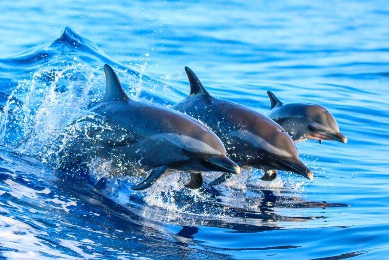 dolphin watching in Destin