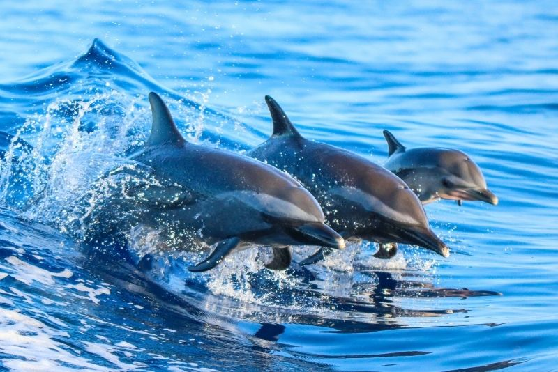 dolphin watching in Panama City Beach