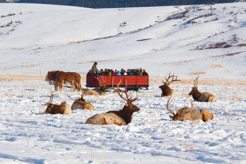 sleigh ride through the National Elk Refuge