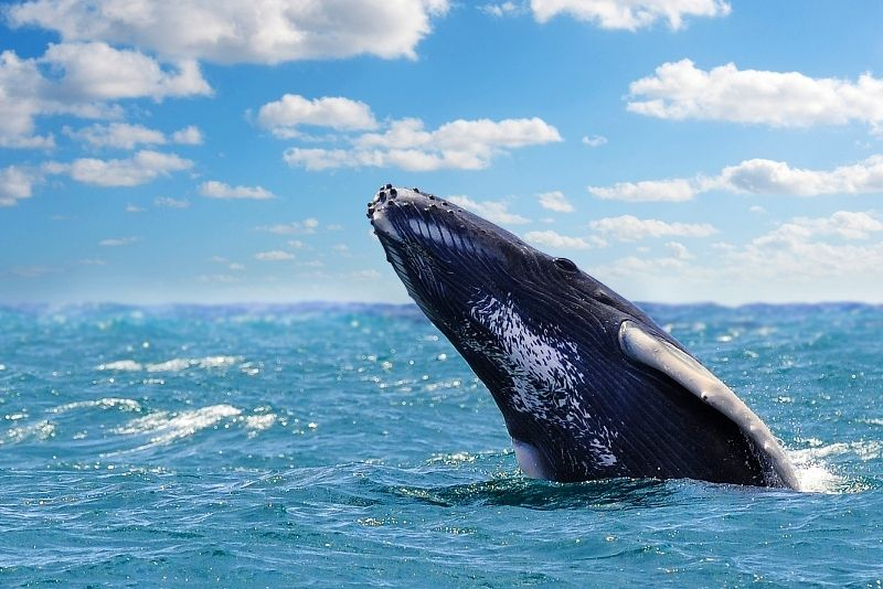 whale watching in Panama City