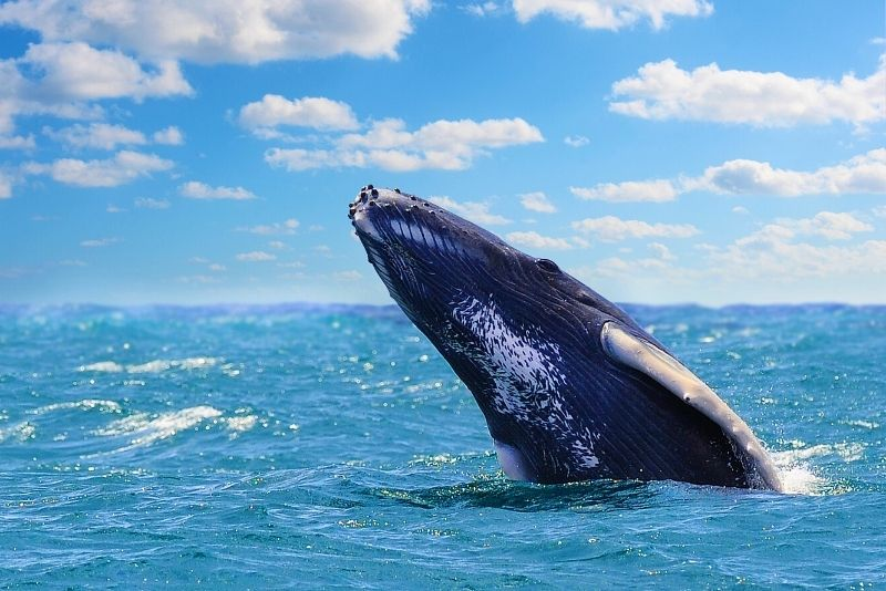 whale watching in Quebec City