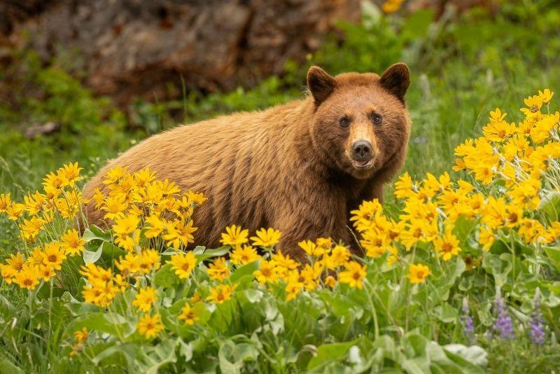 wildlife safaris in Jackson Hole