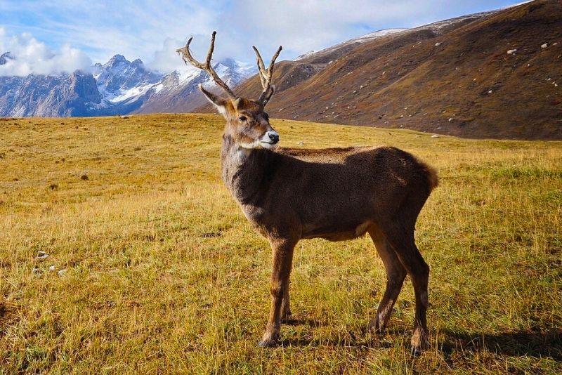 wildlife tours in Anchorage