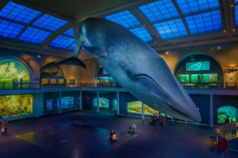American Museum of Natural History, Manhattan