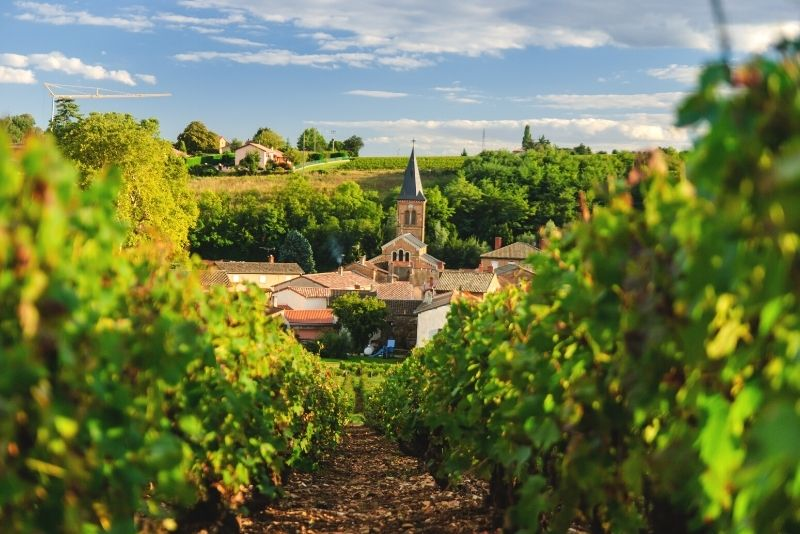 Beaujolais day trip from Lyon