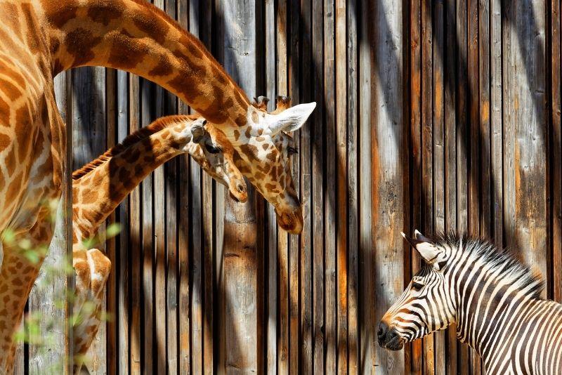 Lyon Zoo