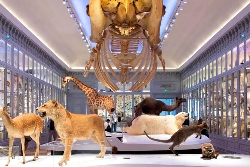 Muséum de Bordeaux - sciences et nature