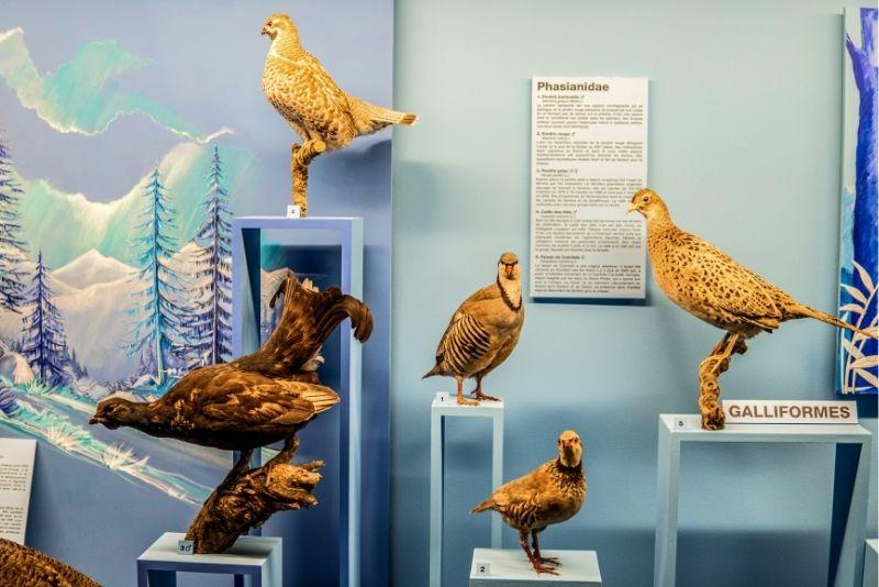 Museum of Natural History, Geneva