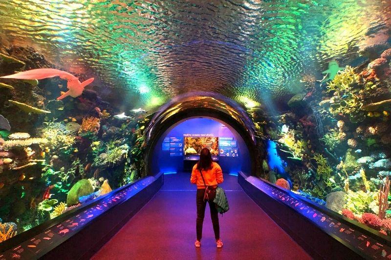 New York Aquarium, Brooklyn
