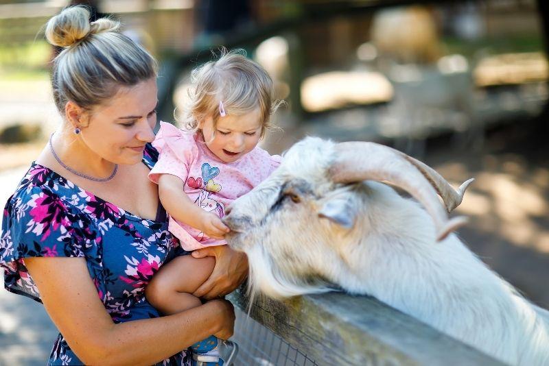 Piglets Adventure Farm, York
